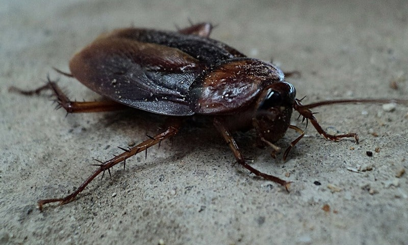 Dream about Roaches – Analysis & Interpretation
