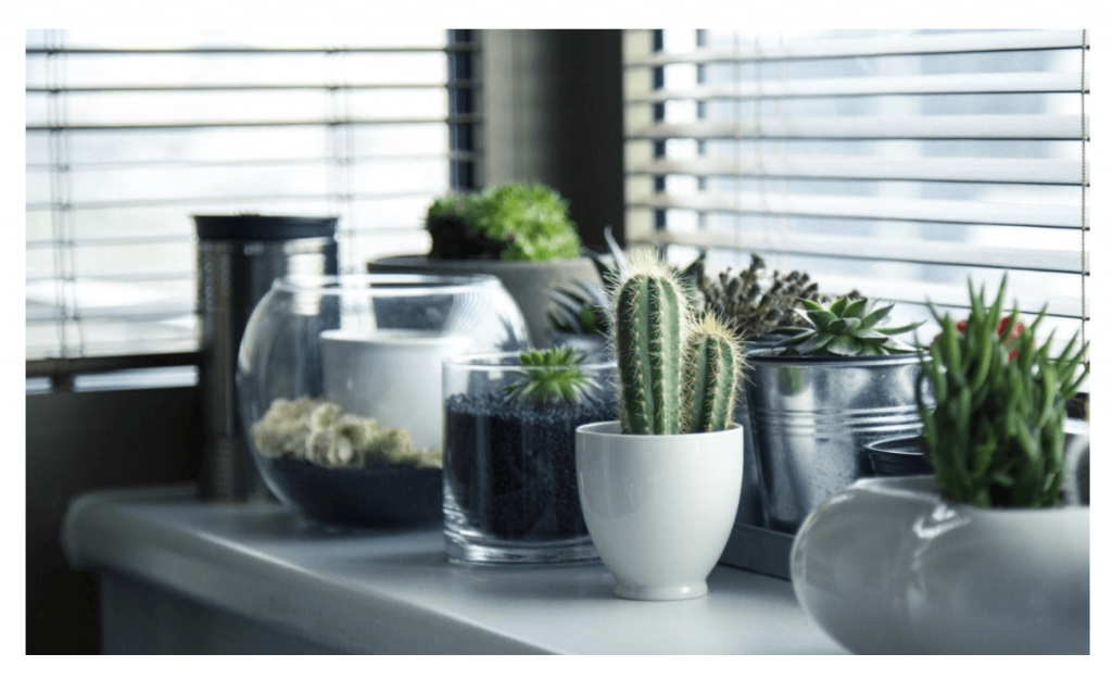 Indoor Plants for Beginners: A Homegrown Guide to Lush Indoor Spaces