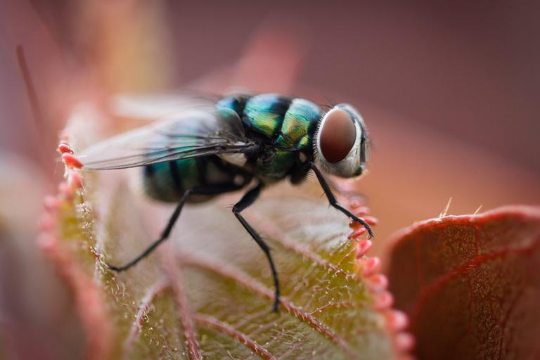 Fly Spiritual Meaning: Biblical and Spiritual Meaning of Flies