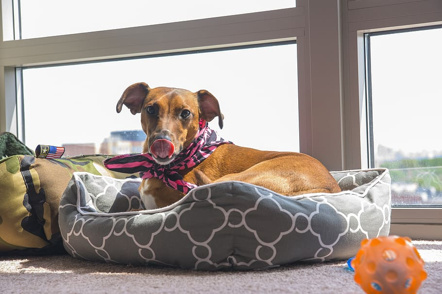 Shopping for Pet Supplies and Accessories Online